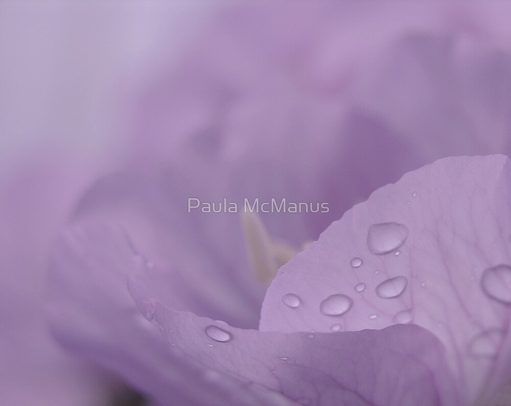 Purple Blur by Paula McManus