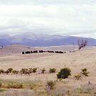 Great Dividing Range, NSW, Australia by C J Lewis