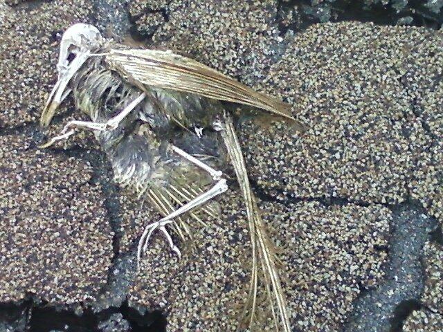DEAD by ironbutterfly72