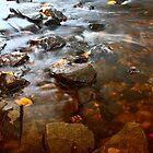 Fall stream by Charlie Zielinski