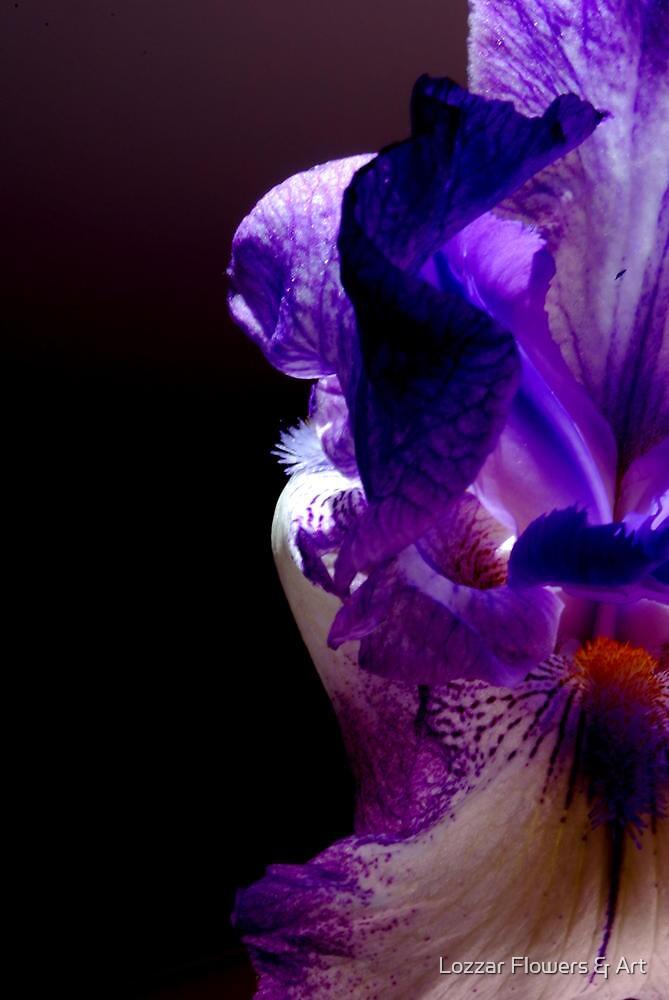 Flower of Paradise by Lozzar Flowers & Art