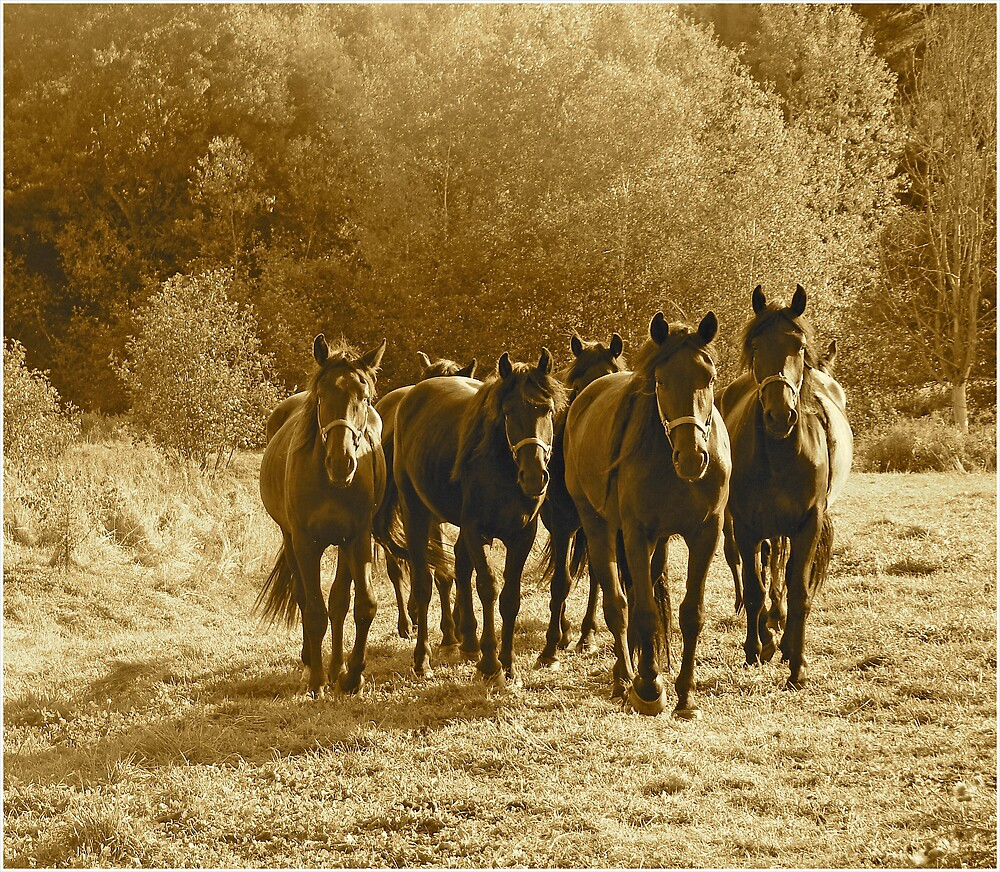 Horses In Sepia by marchello