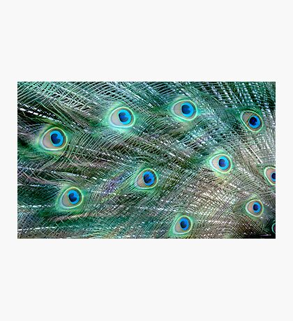Shake your Tail Feathers Mr Peacock ! Photographic Print