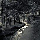 Ohariu Valley  by Christine Wilson
