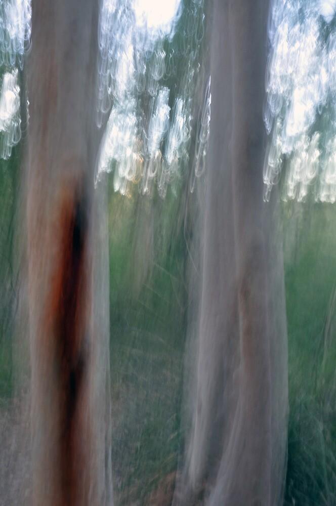 Gum Trees - Lane Cove National Park by Jason McFarlane