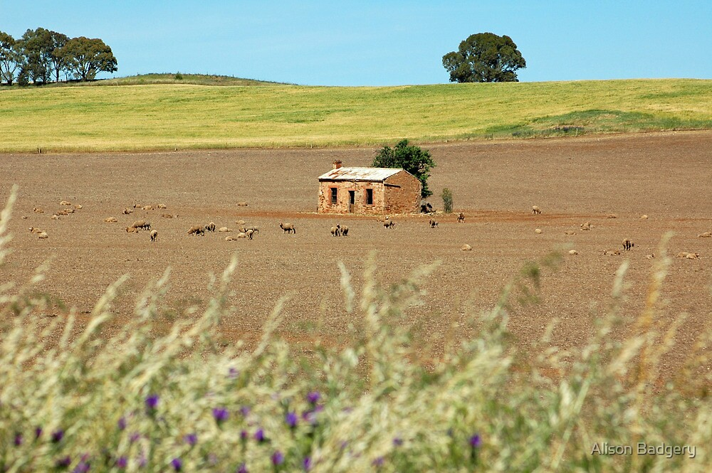Abandoned House, north western SA by Alison Badgery