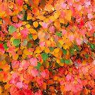 Magic Of Autumn by RickDavis