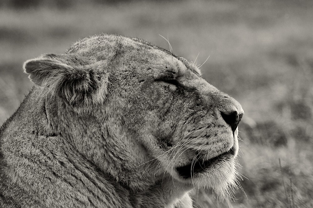 Lion Queen II by Mabs