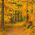 Golden path by kawe