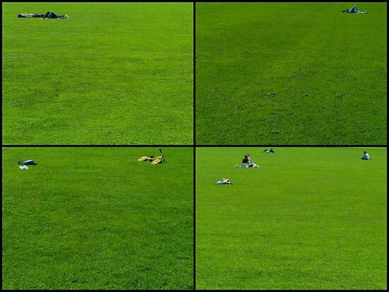 Grass by TalBright