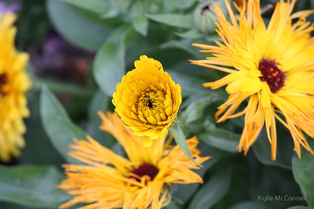 sunshine in a flower by Kylie McConnell