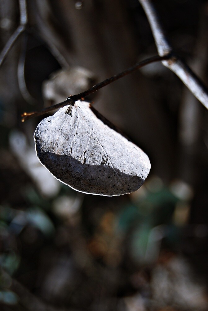 dry leaf by Molly  Hanson