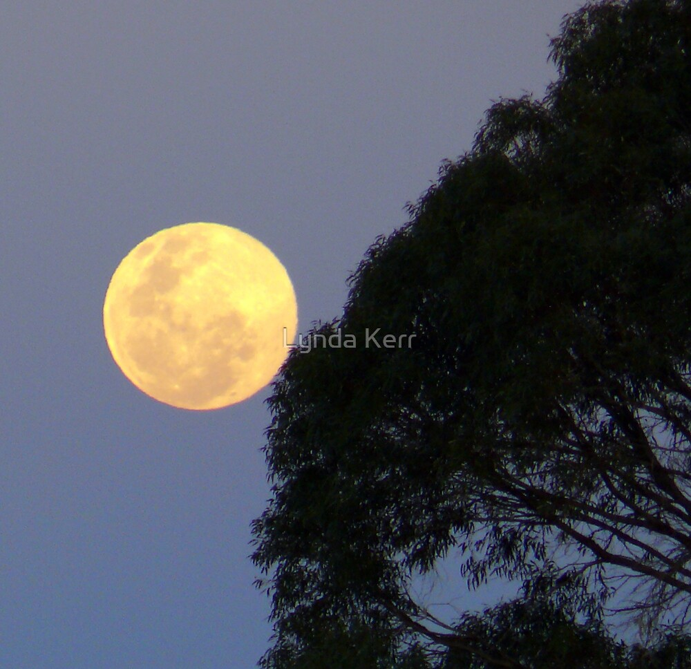 Moon in Scorpio. by Lynda Kerr
