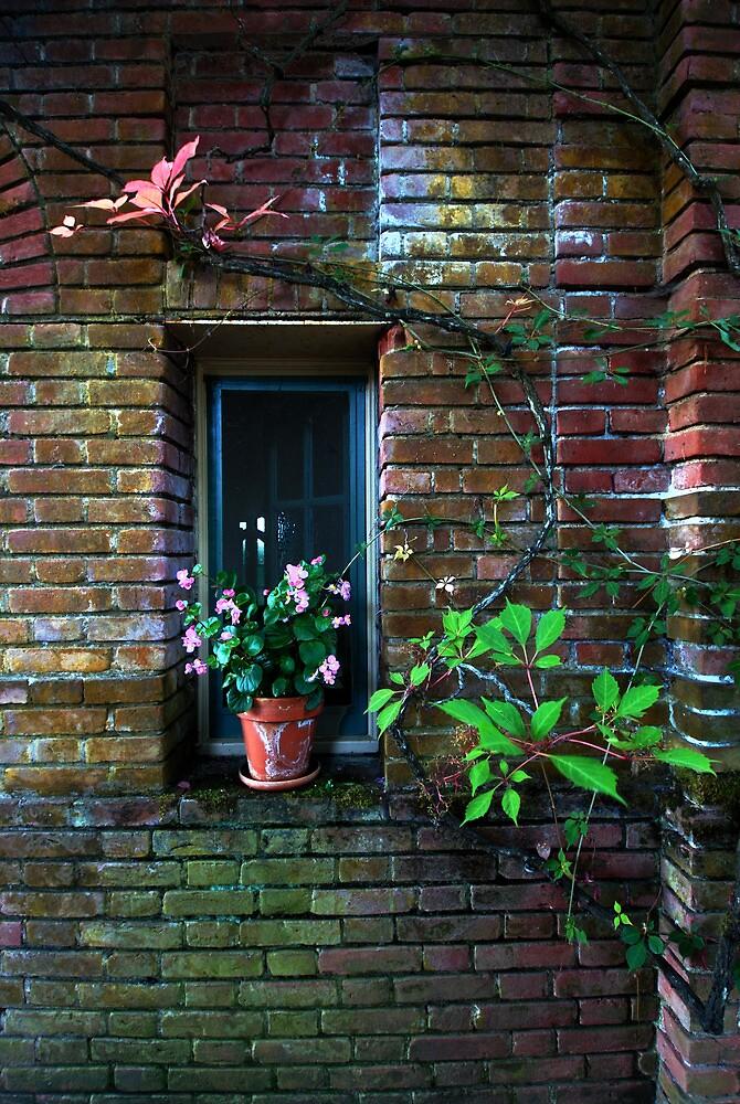 Flower Pot in Window by Cathy P. Austin