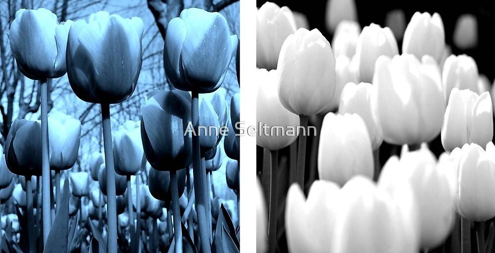 tulips by Anne Seltmann