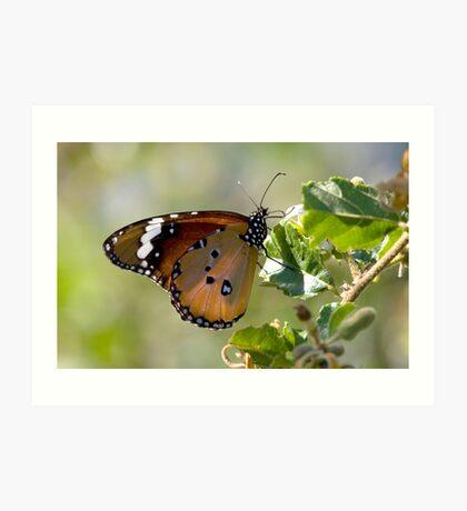 African Monarch Butterfly Art Print