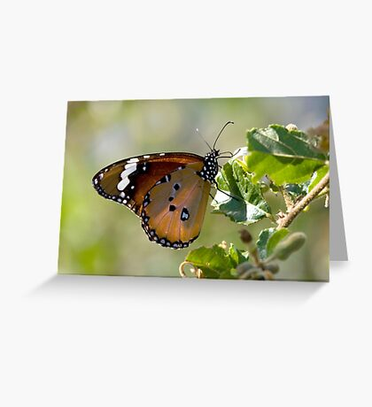 African Monarch Butterfly Greeting Card