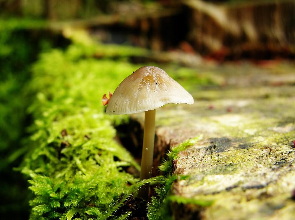 Wild Mushroom Fungus by Jonathan Hughes