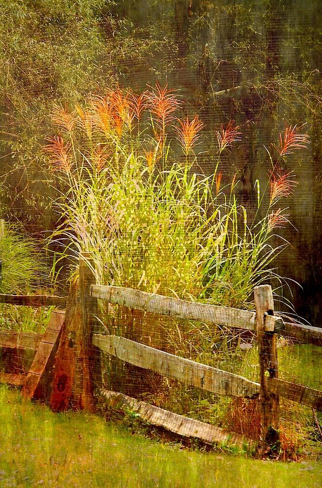 Designer grass..... by DaveHrusecky