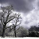 Infrared Trees by Jonathan Hughes