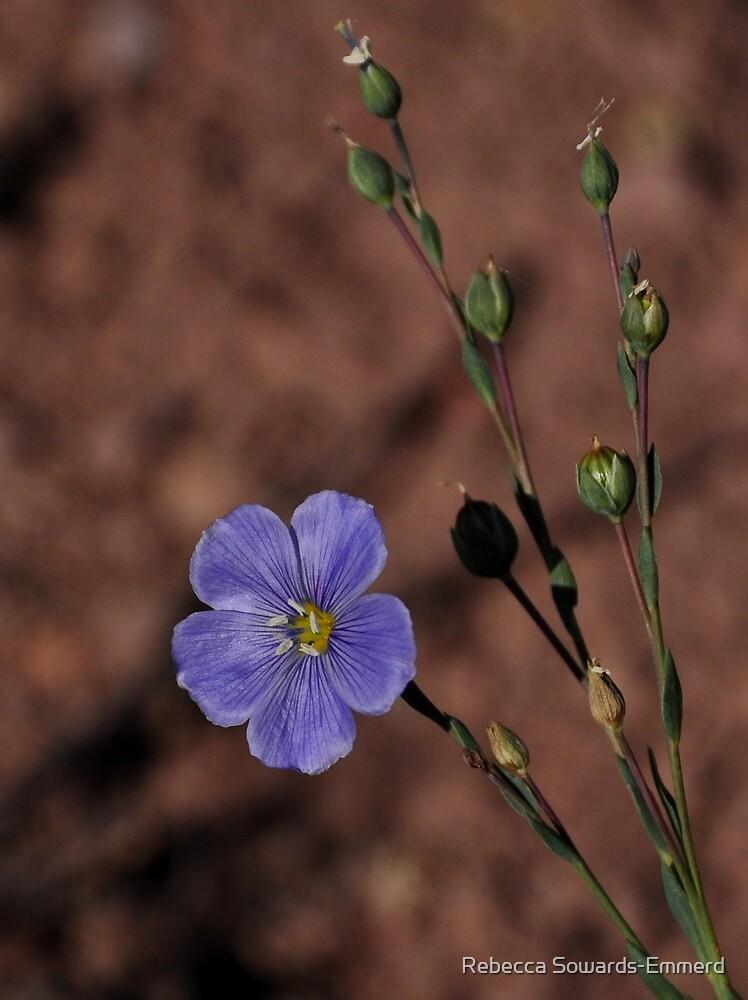 Blue Flax - Sonora Peak - Sierra Nevada  by Rebecca SowardsEmmerd