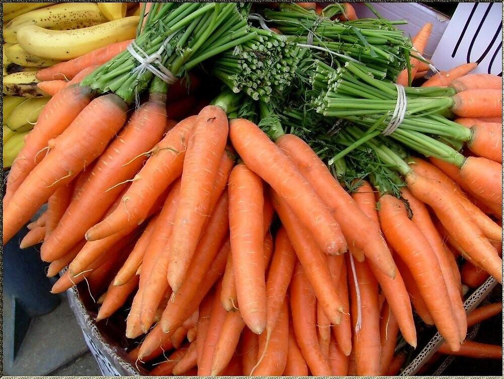 Carrot--loves the bunny by Ana Belaj