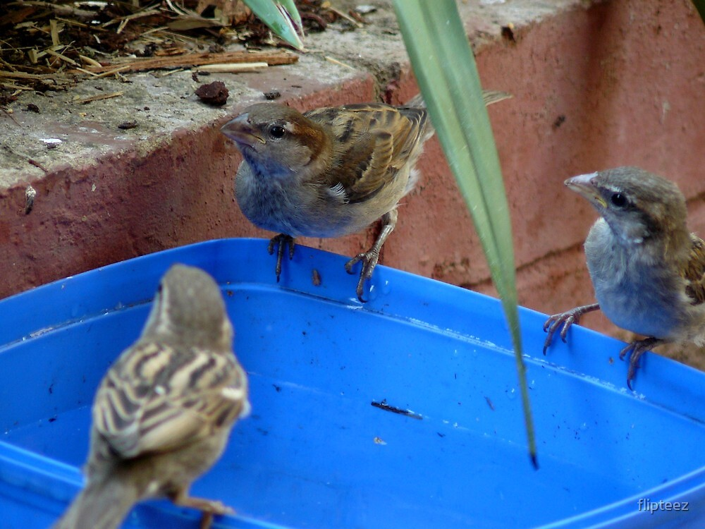 Bird Series...6 by flipteez