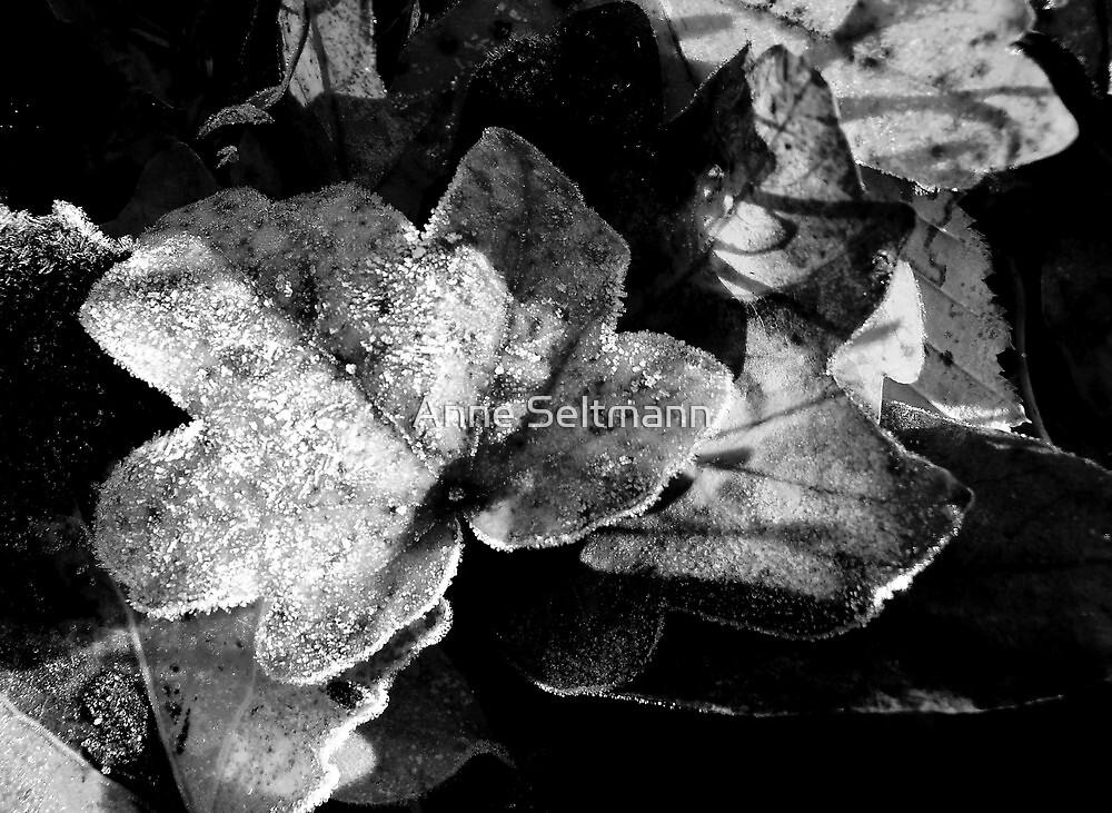 frozen by Anne Seltmann