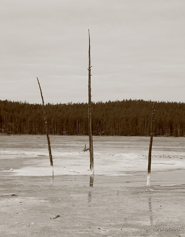 Natures pitchfork by rnrphoto98
