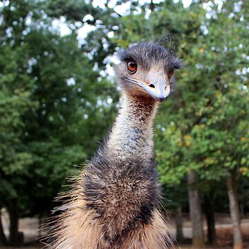 Curious Emu by Cynthia48