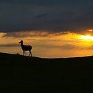 Deer: Broadway Tower by JLaverty
