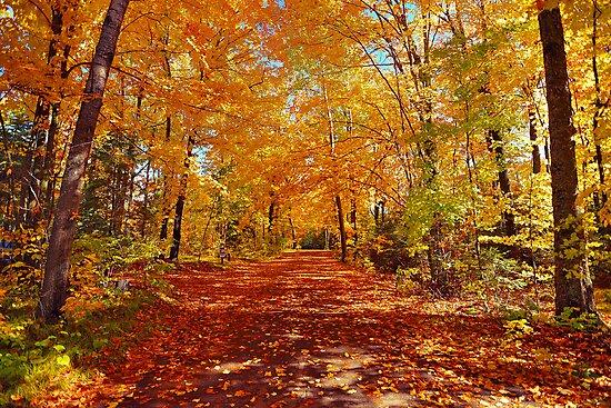 Autumn by Beverlytazangel