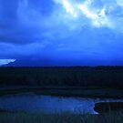Eubenangee Swamp by Ron  Wilson