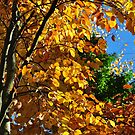 Autumn Feeling by Daidalos