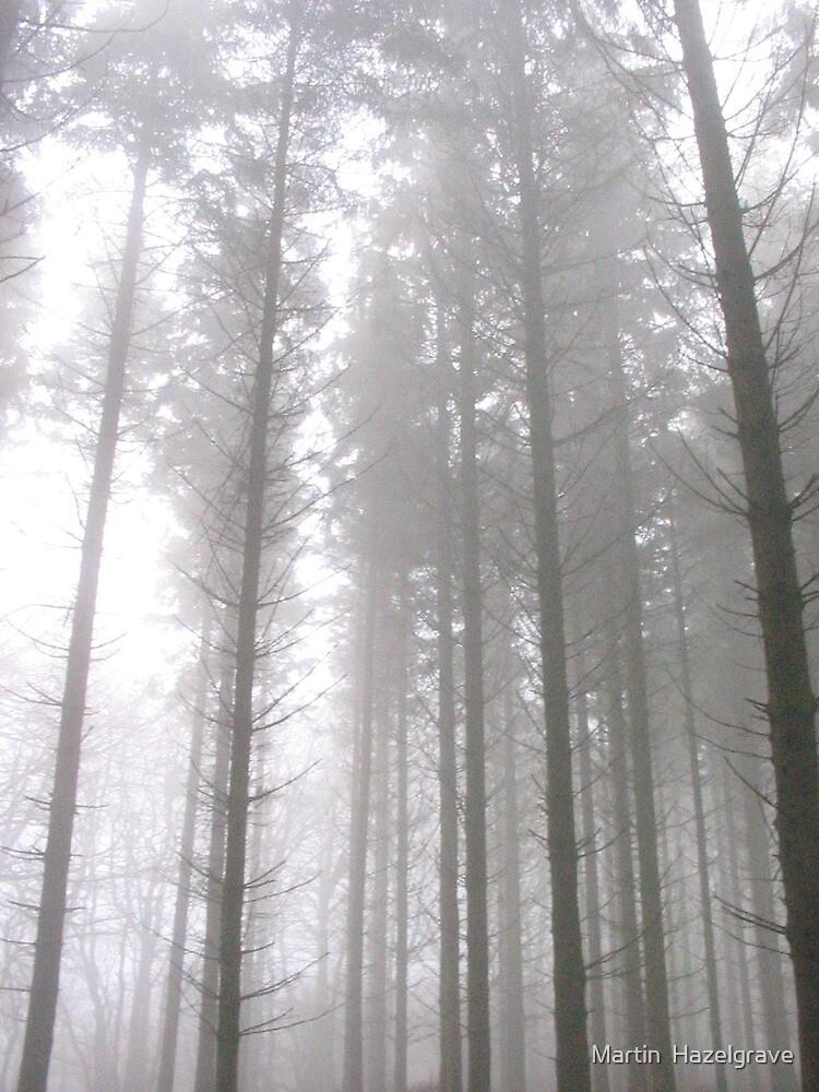 Misty pines by Martin  Hazelgrave