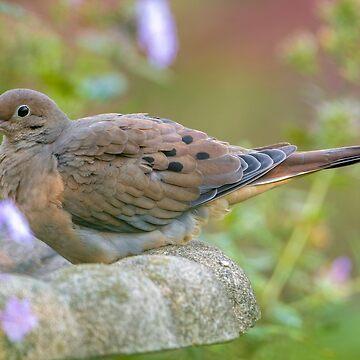 Mourning Dove On Bird Bath by jaydee1400