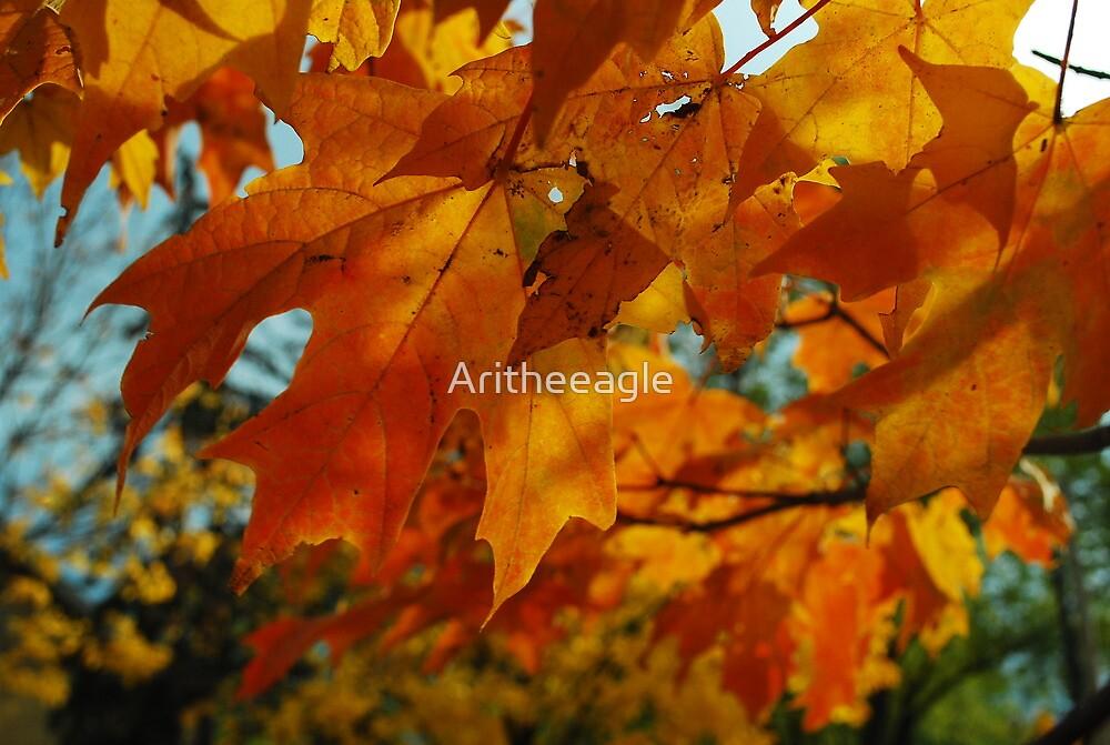 Ari's EYE : BEAUTY by Aritheeagle