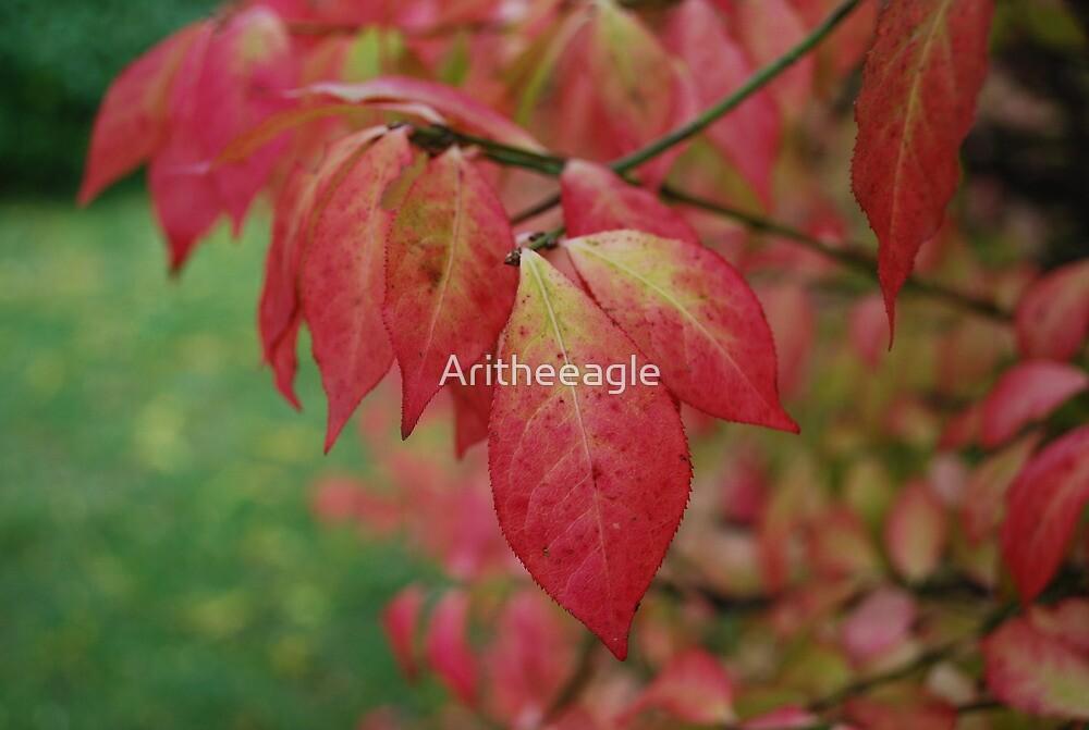 Ari's EYE : VANITY by Aritheeagle