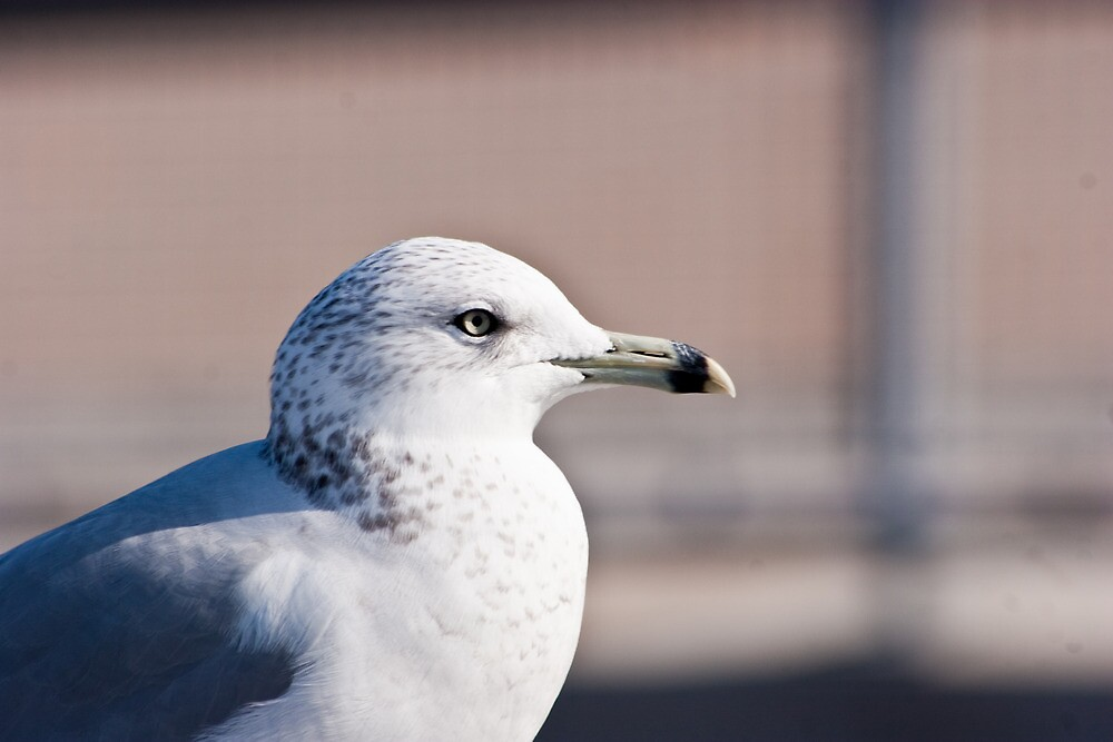 Avian Profile by Dave Bledsoe