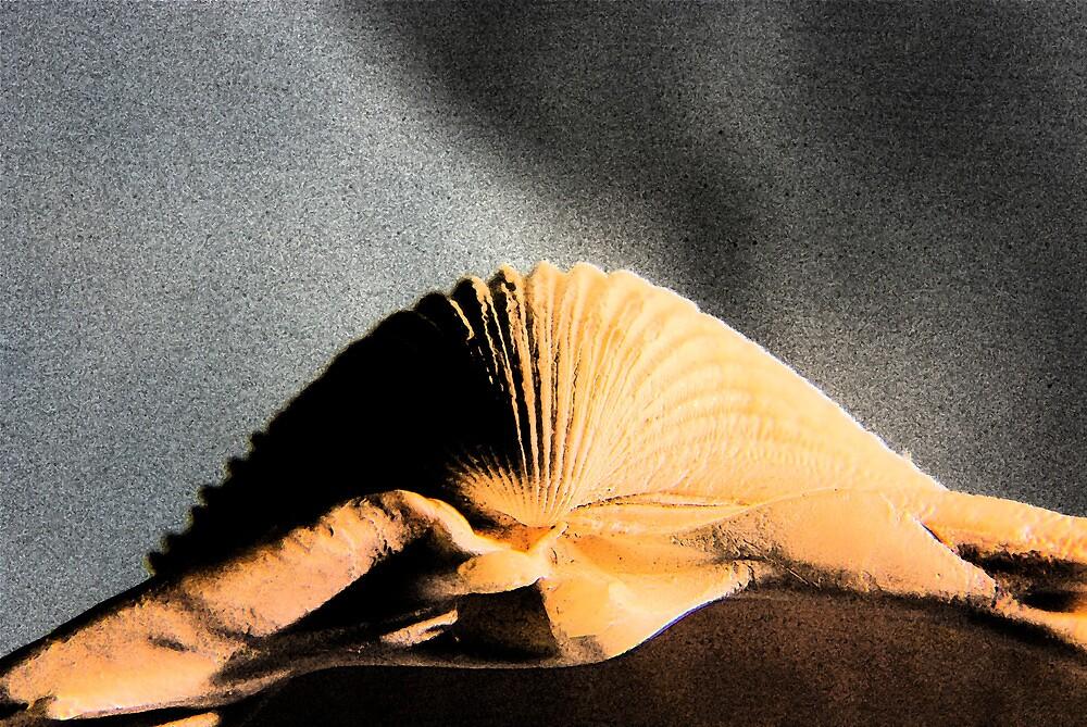 Seashell by Rasevic