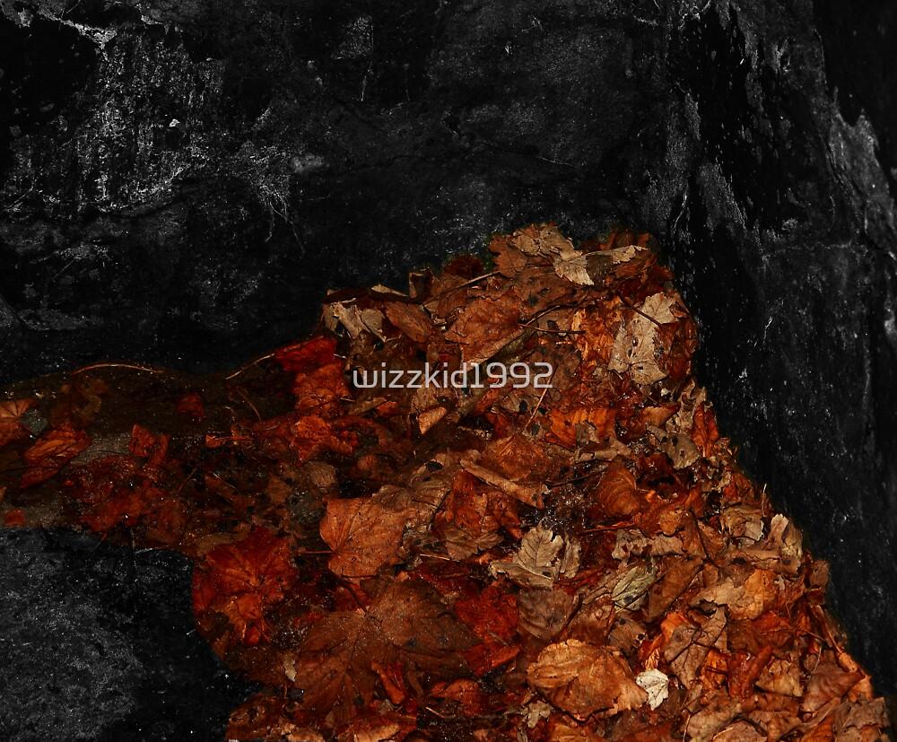 Fallen Leaves by Alex Pauley