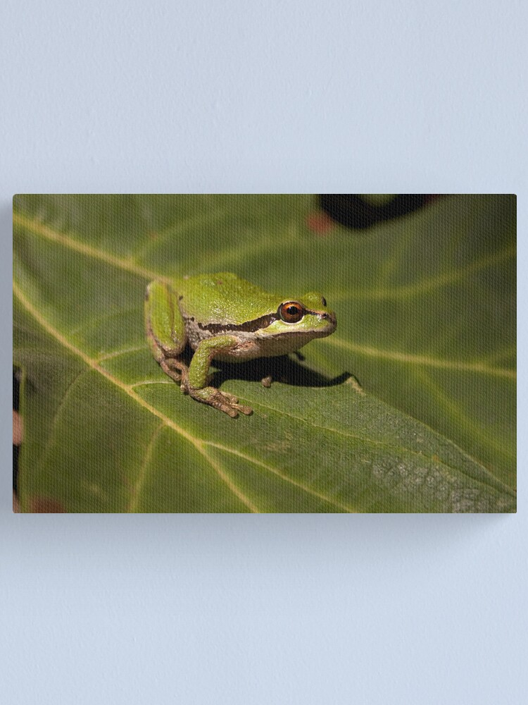 Alternate view of Pacific Treefrog Canvas Print