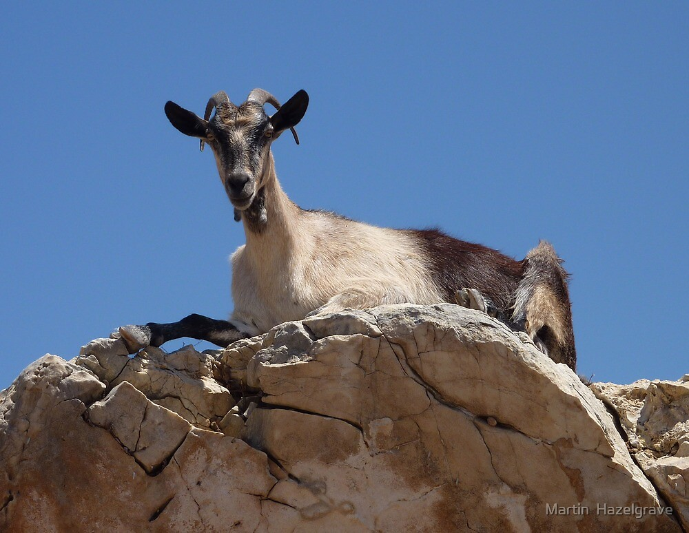 Goat Naxos by Martin  Hazelgrave