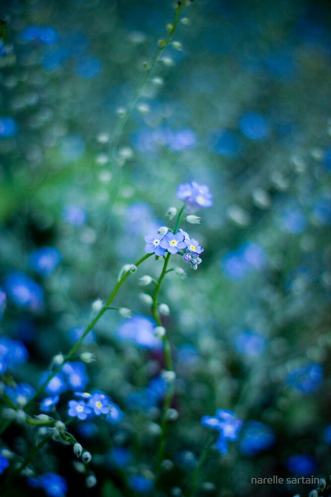 tiny flowers glow by narelle sartain