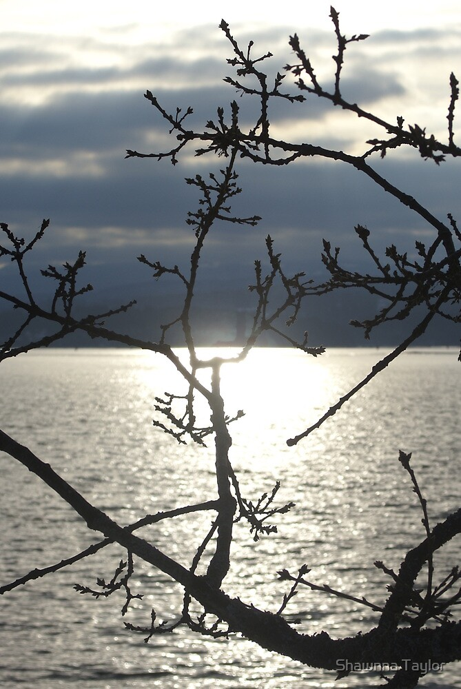 Silhouette Of A Tree Overlooking The Bay by Shawnna Taylor