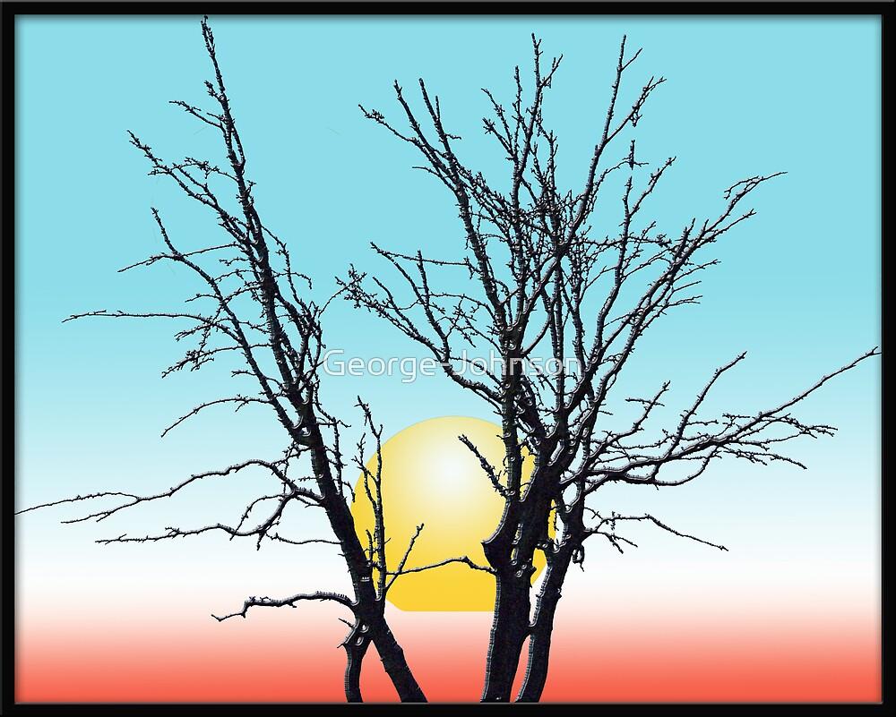 Sunshine behind tree by George-Johnson
