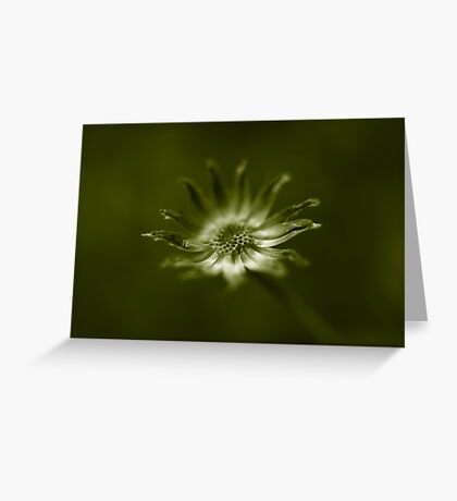 end of daisy days Greeting Card