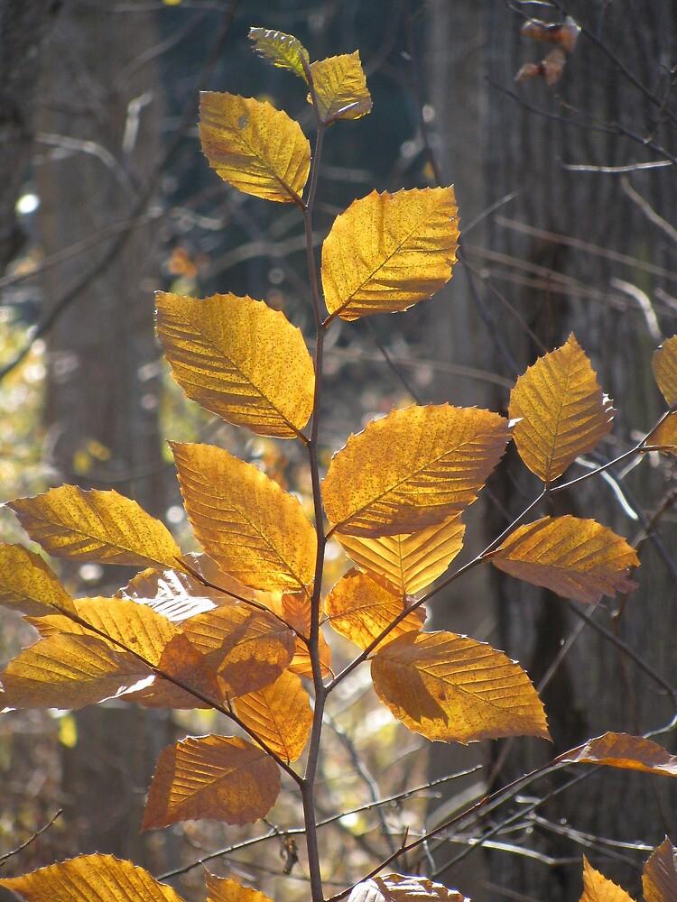 Leaves by heatherd322