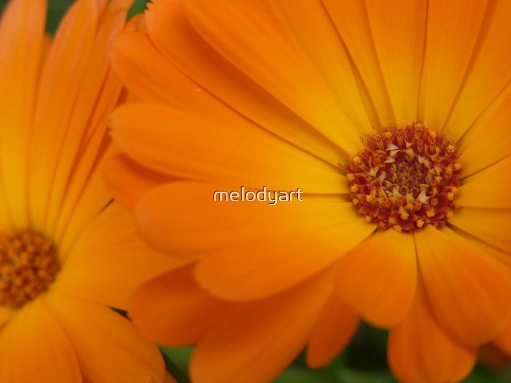 Oranges by melodyart