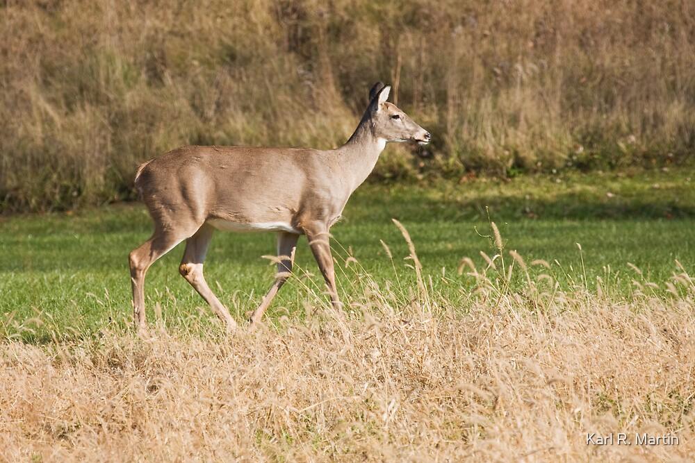 Female Deer by Karl R. Martin